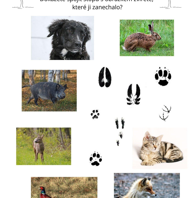 Stopy zvířat – pracovní list